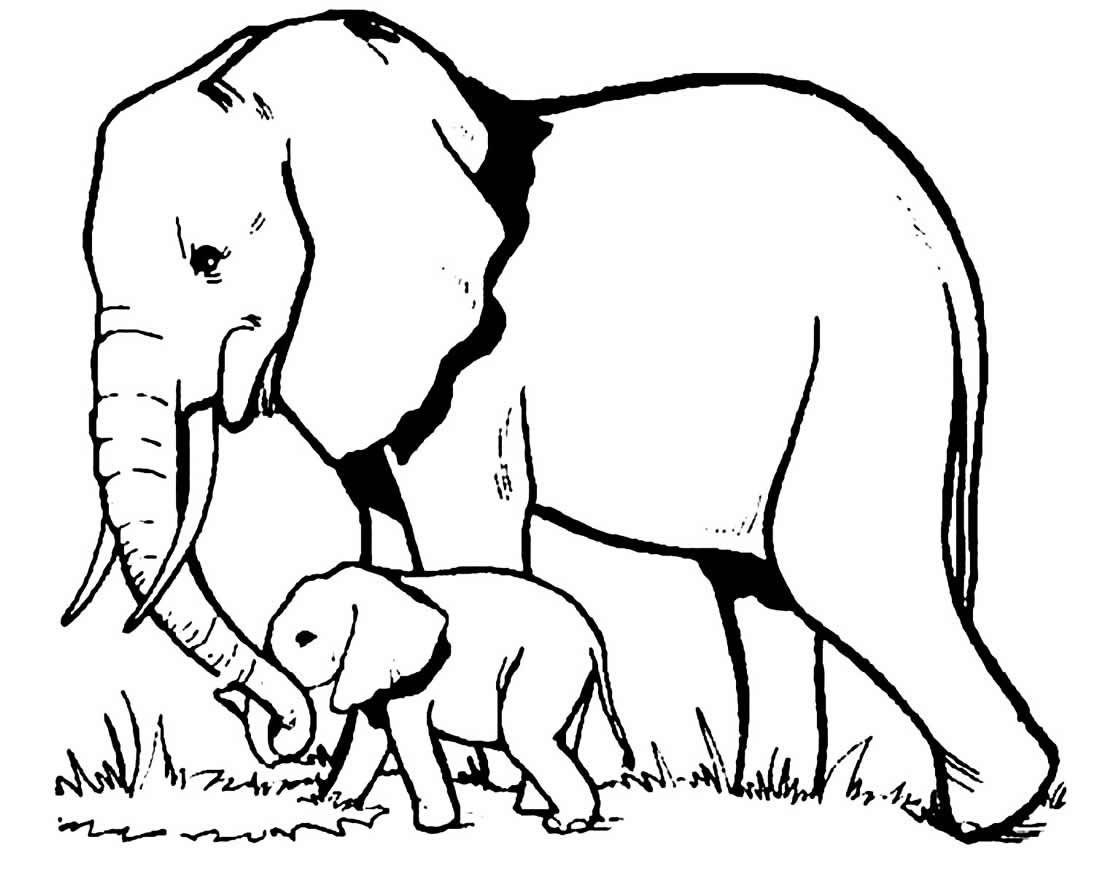 Desenho de elefantes para pintar