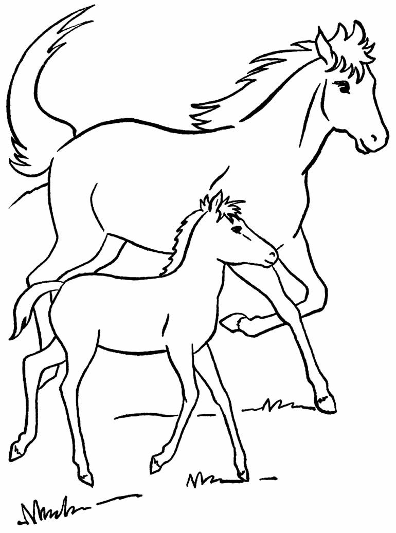 Desenho de cavalos para colorir