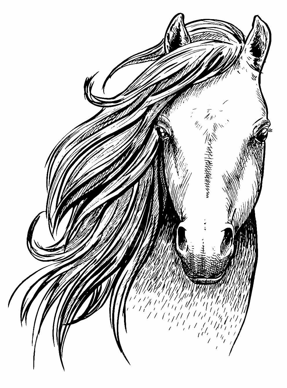 Desenho lindo de Cavalo para pintar