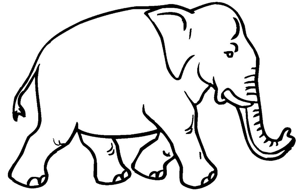 Imagem de elefante para pintar