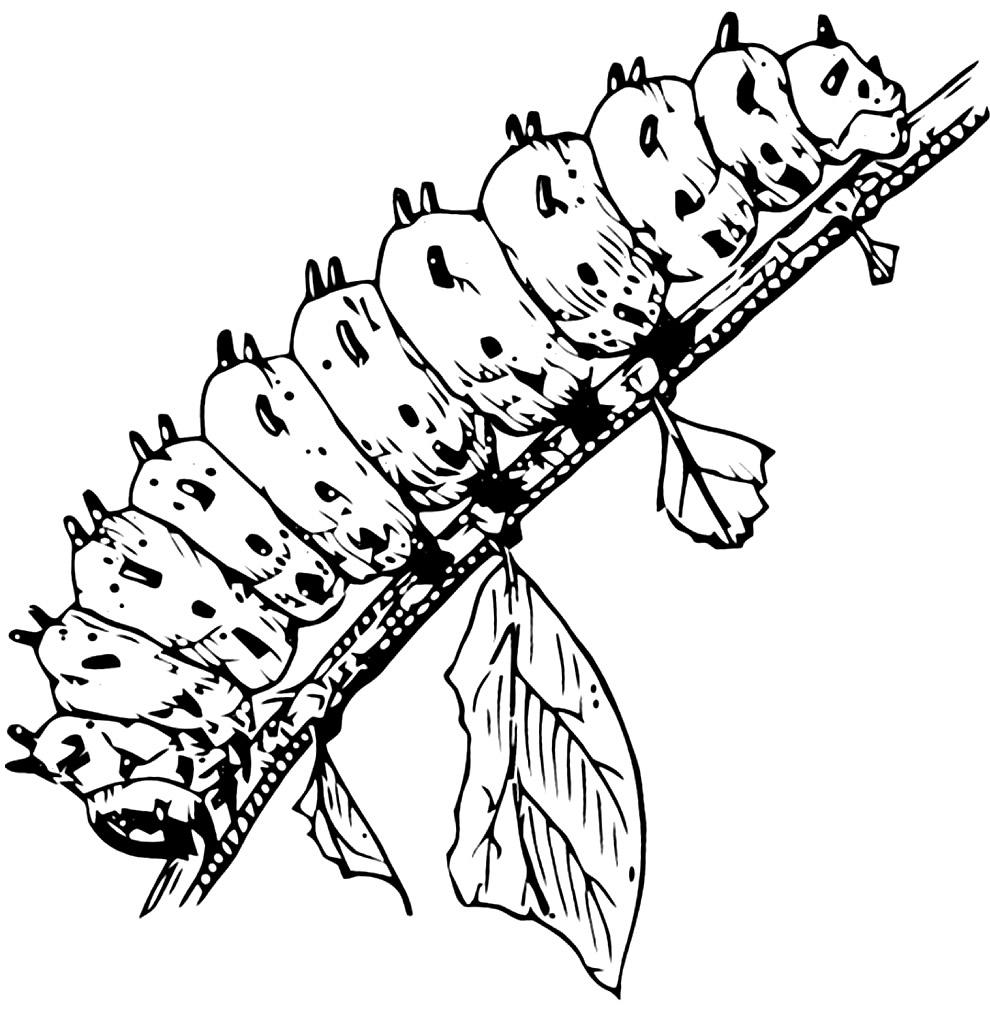 Desenho de lagarta para pintar