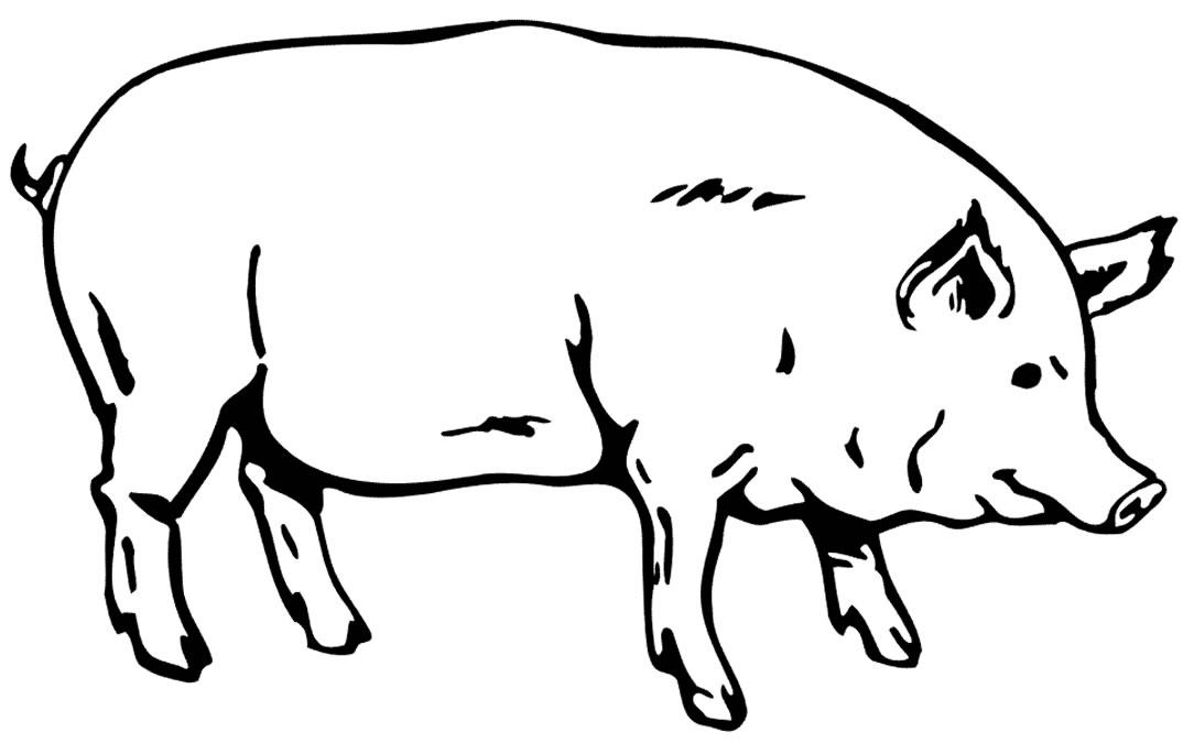 Imagem porquinho para colorir