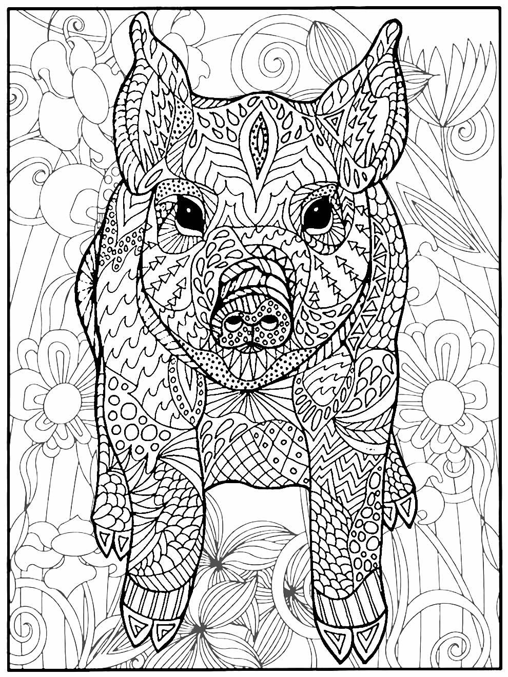 Imagem de porco para pintar