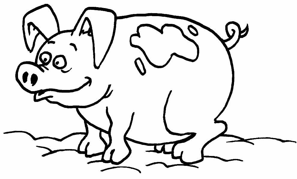 Imagem de porco para colorir
