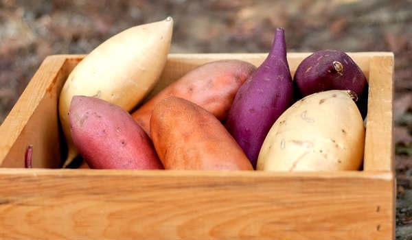 variedades de batata doce