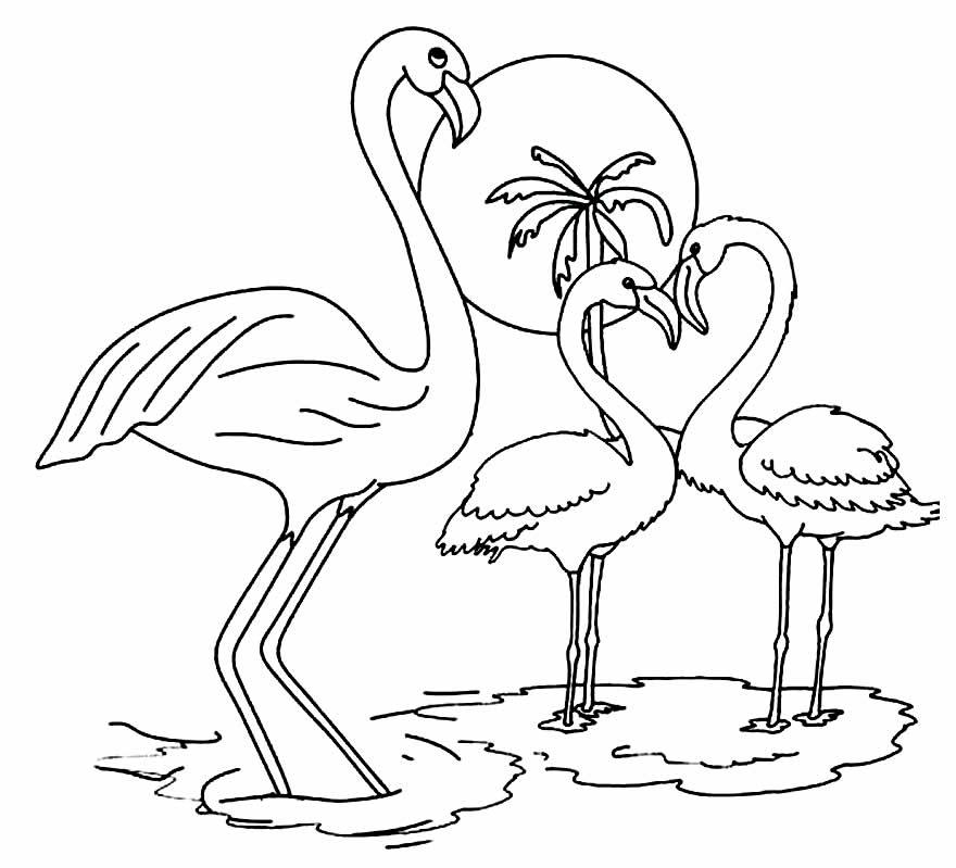 Imagem de Flamingo para imprimir