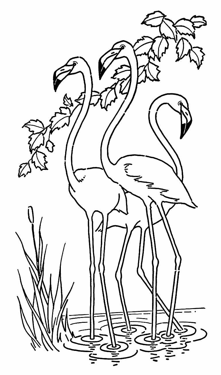 Imagem de Flamingo para imprimir e colorir
