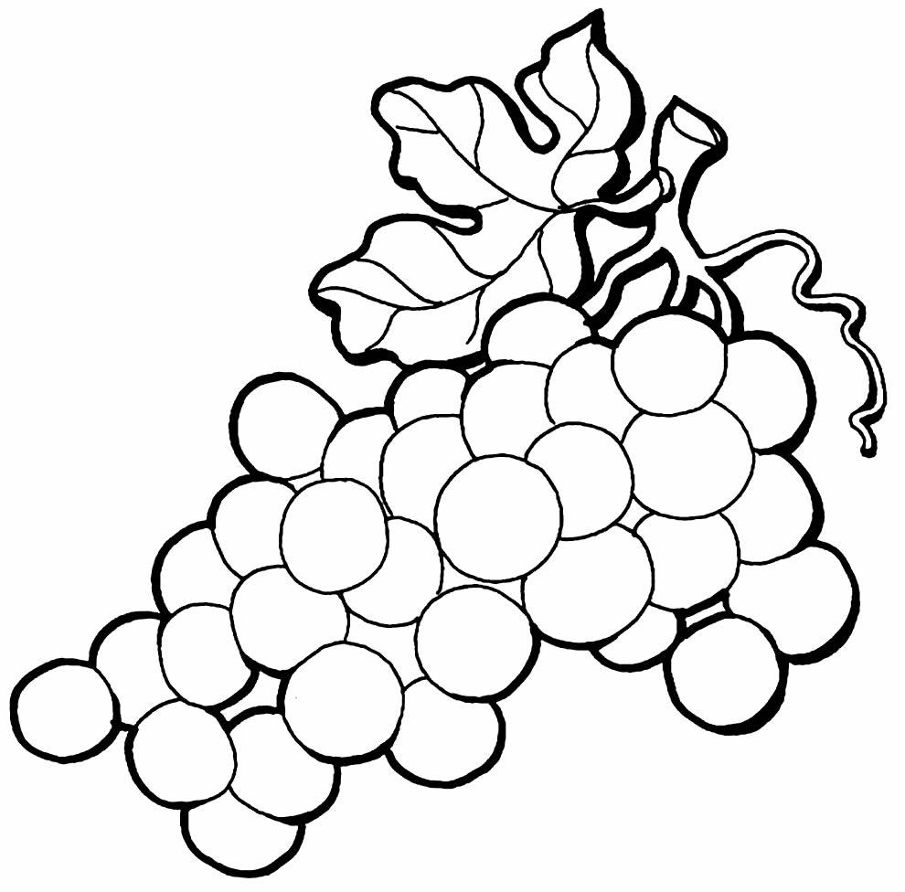Imagem de uva para pintar