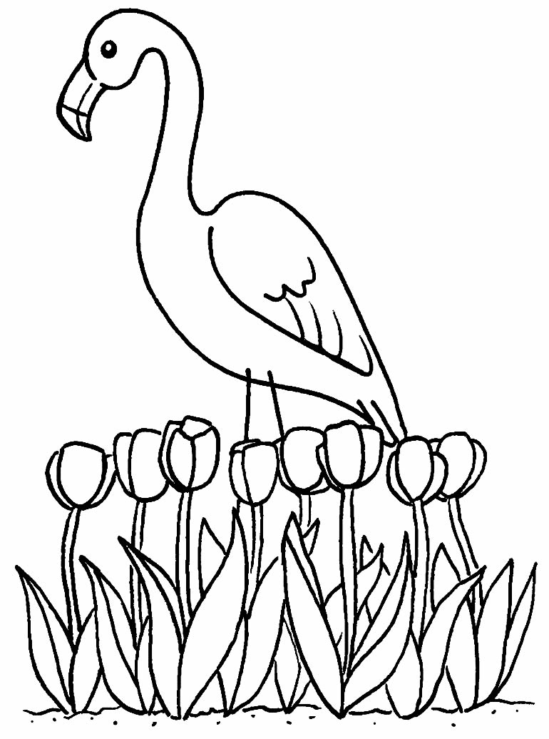Desenho de Flamingo