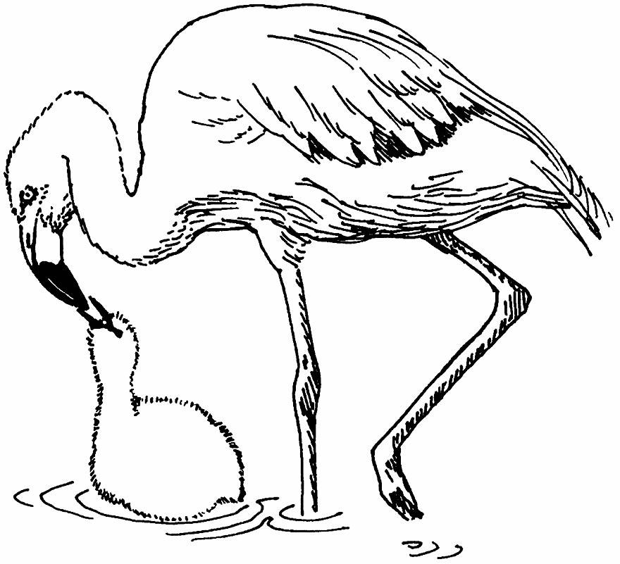 Imagem de Flamingo para pintar