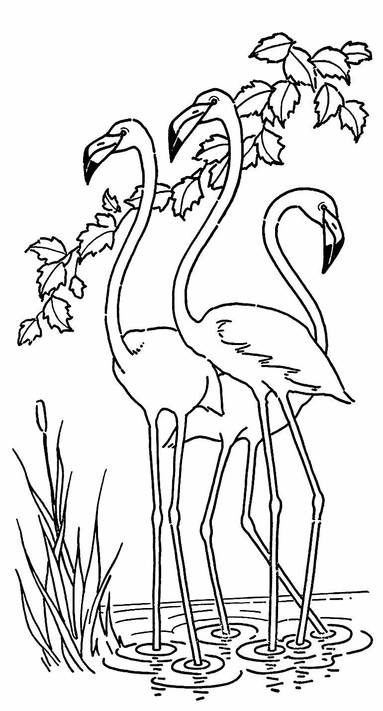 Imagem de Flamingos para colorir