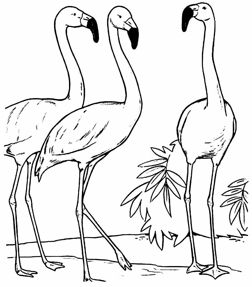 Desenho de Flamingos para colorir