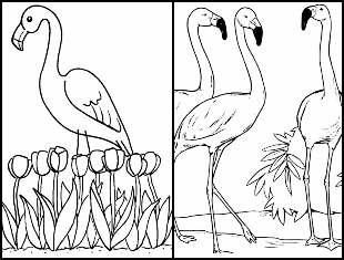 Desenhos para colorir de Flamingo