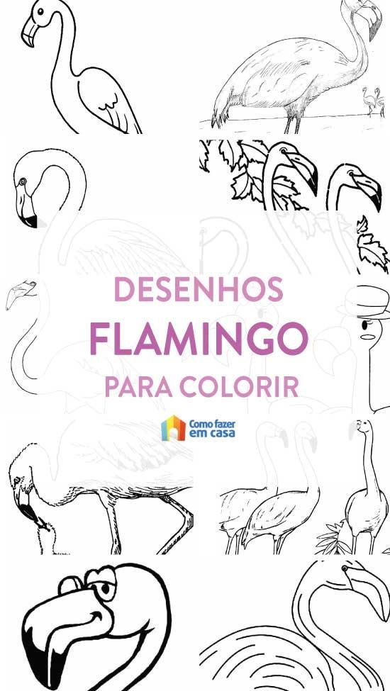 Desenhos de Flamingo para colorir