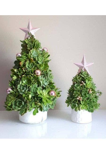árvores de natal com suculentas