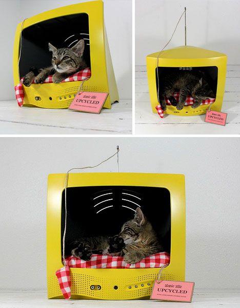 casa para cachorros e gatos