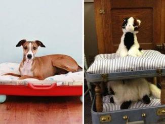 como fazer cama para pet com mala