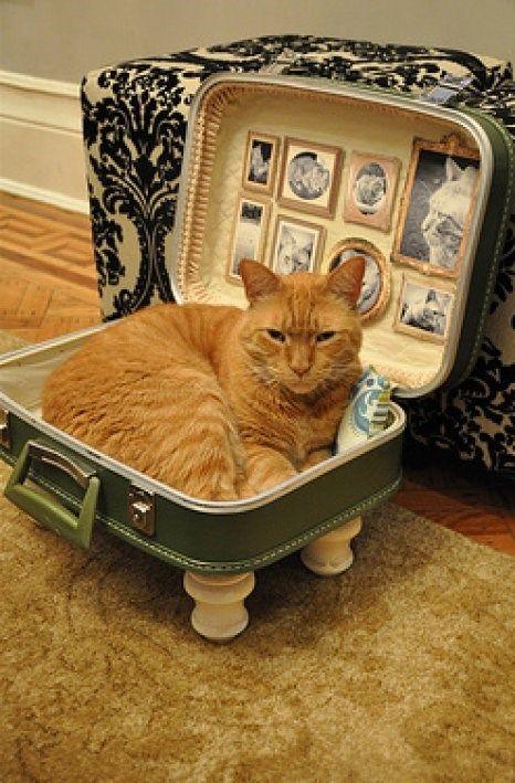 meleta como cama para gatinho