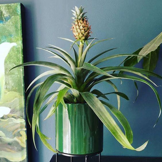 Além de tudo pode se transformar em um lindo vaso decorativo