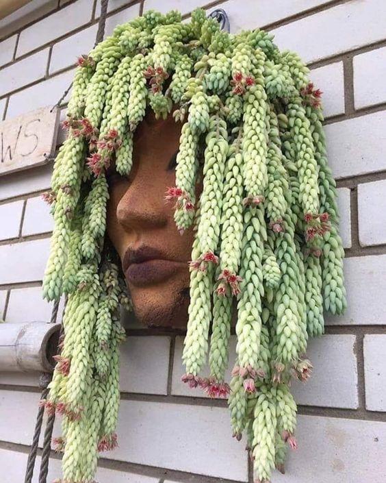 vaso de cabeça em parede com suculentas