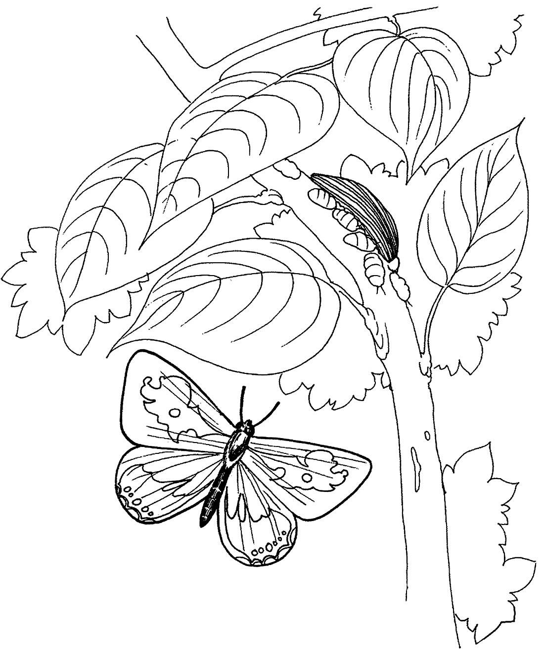 Desenho de Lagarta para colorir