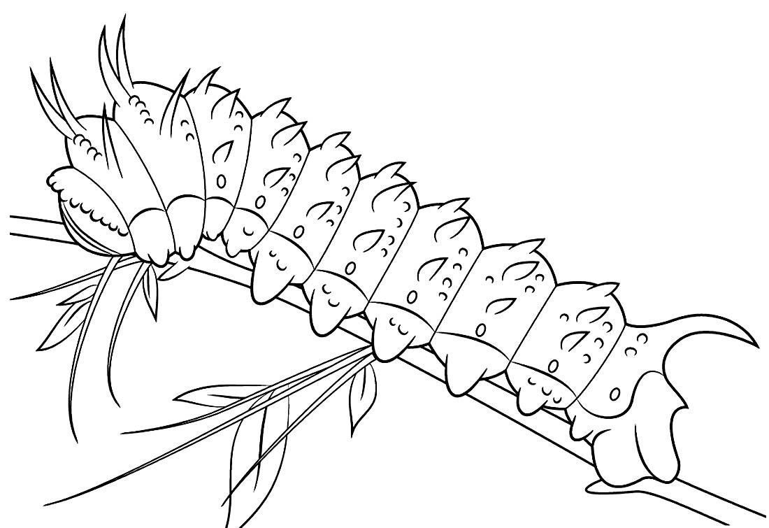 Desenho lindo de Lagarta