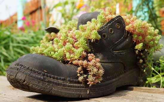 Suculentas em sapatos