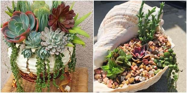 Ideias para plantar suculentas de maneira diferente