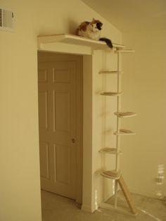 Nichos e prateleiras para gato