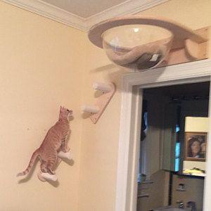 Nichos e prateleiras para gatos