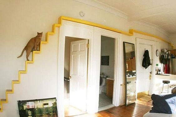 escadas para gatos