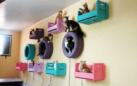 brinquedos para gatos com pallets e pneus