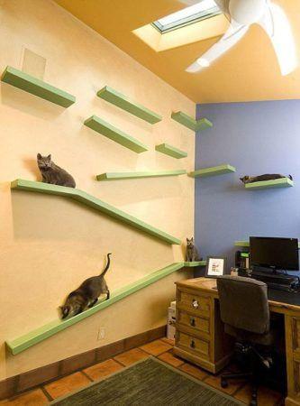rampa em circuito para gatos