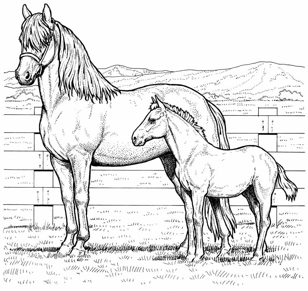 Desenho de cavalos para pintar