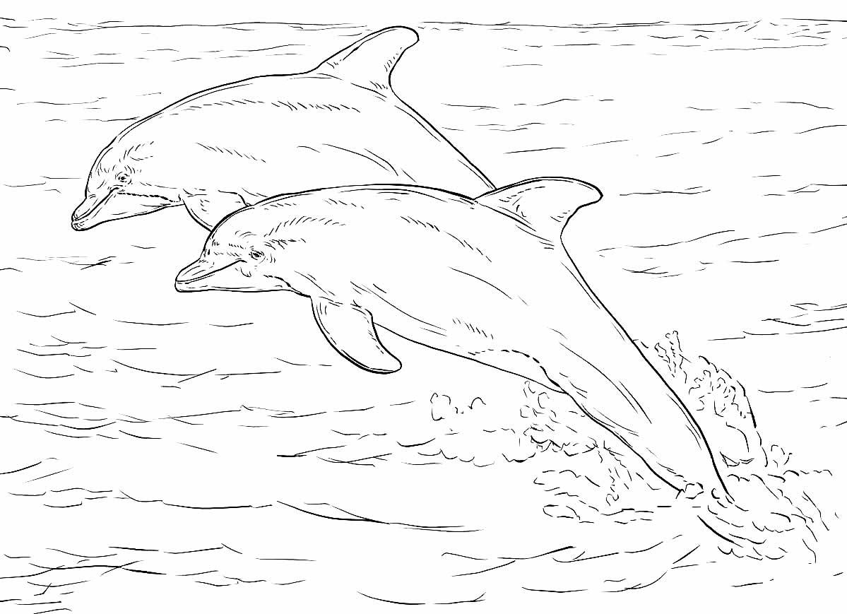 Desenho de Golfinhos para imprimir e colorir