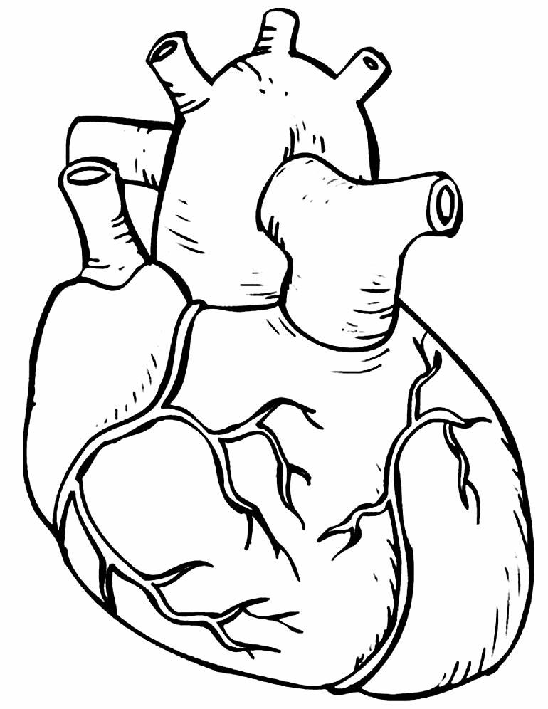 Desenho de coração realístico para pintar