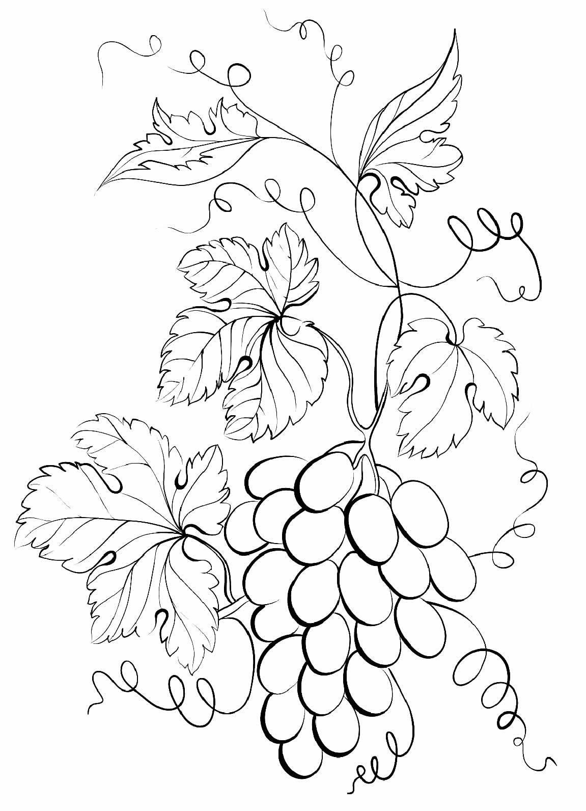 Desenho de Uvas para imprimir e colorir