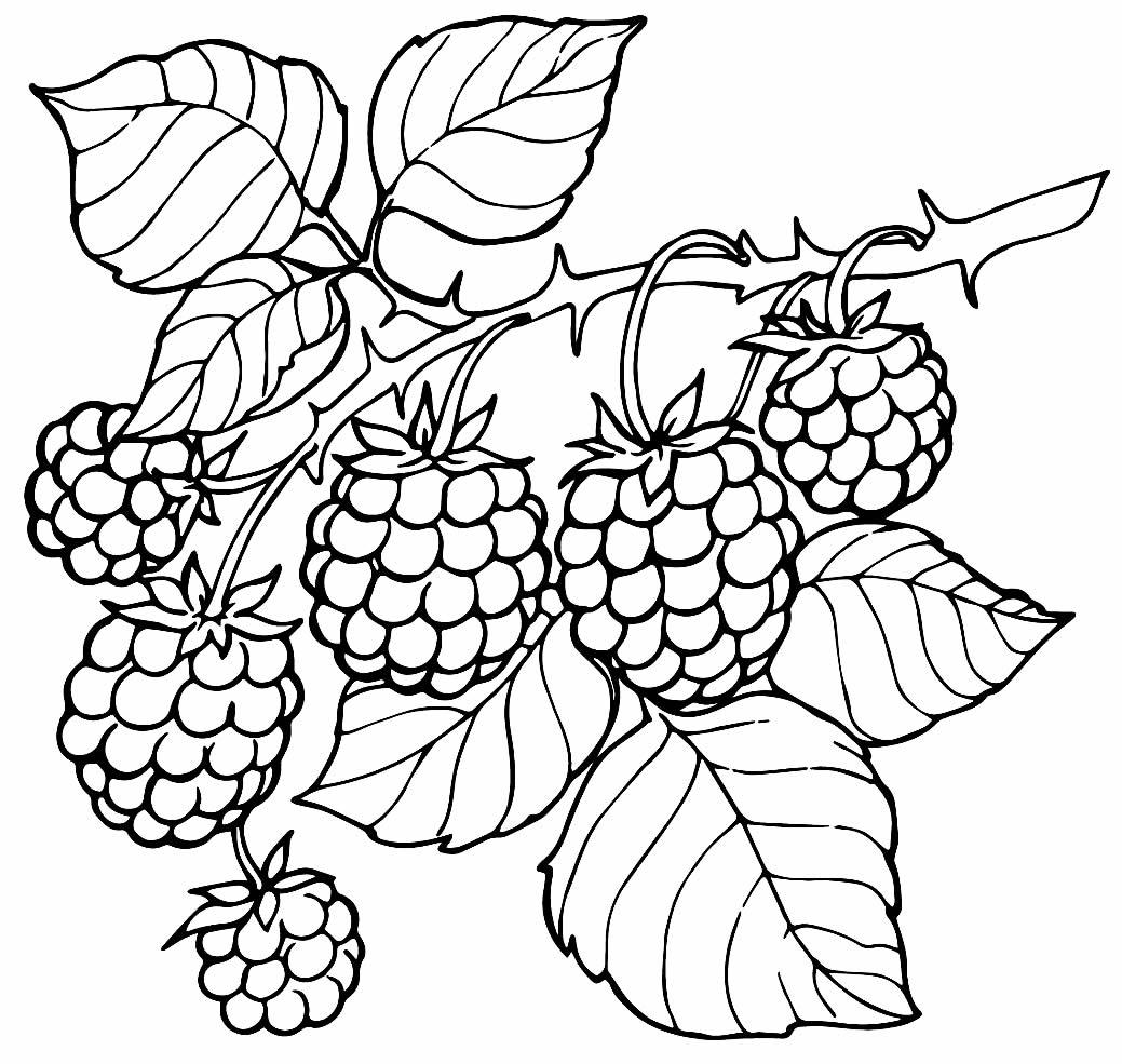 Desenho de Pé de Uva para colorir