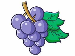 Desenho de Uva