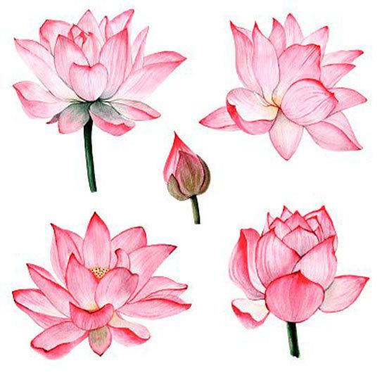 Desenhos de flor de lotus para colorir
