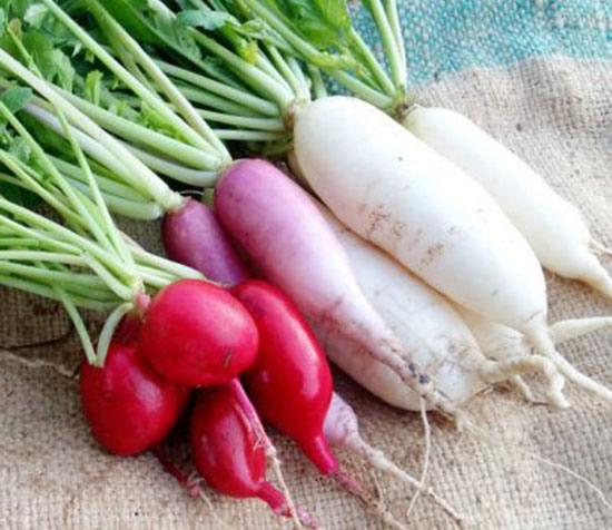 verduras para plantar