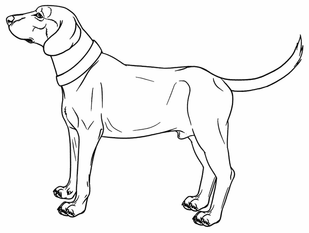 Imagem de cachorro para colorir