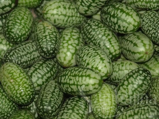 pepino mexicano