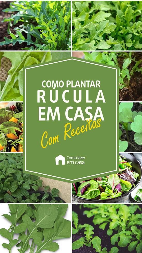 como plantar rúcula