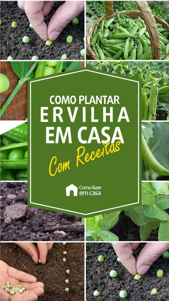 como plantar ervilha