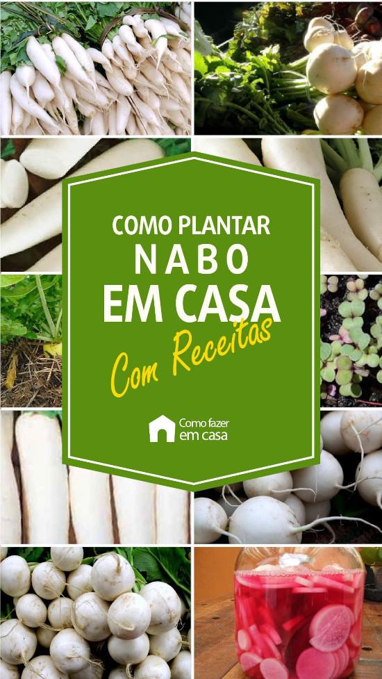 como plantar nabo em casa (12)