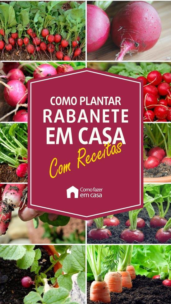 como plantar rabanete