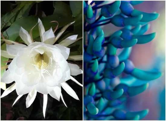 Flores raras e exóticas: 5 lindas plantas