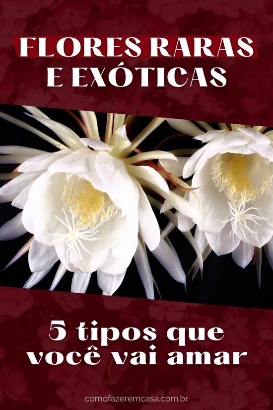 Flores raras e exóticas