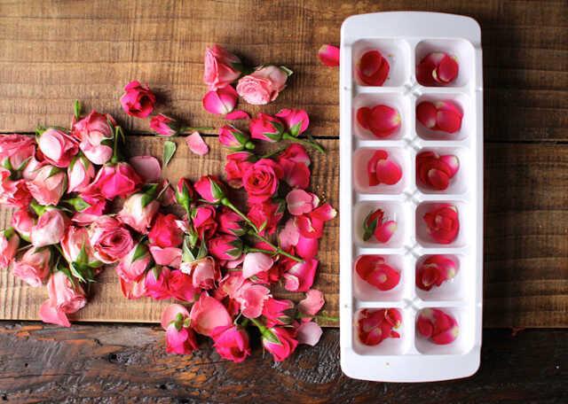 rosas com gelo